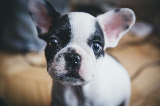 The Practical Training Guide to House-training Your Puppy