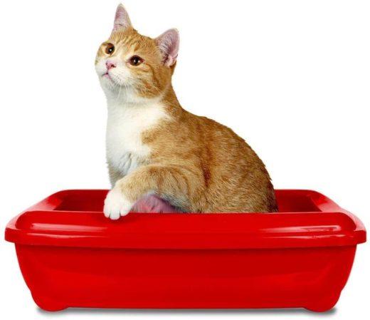 Geruchsentferner für Katzentoilette